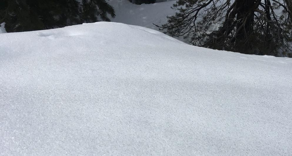 """5mm <a href=""""https://www.sierraavalanchecenter.org/avalanche-terms/surface-hoar"""" title=""""Featherly crystals that form on the snow surface during clear and calm conditions - essentially frozen dew. Forms a persistent weak layer once buried."""" class=""""lexicon-term"""">surface hoar</a> wet at 3pm."""