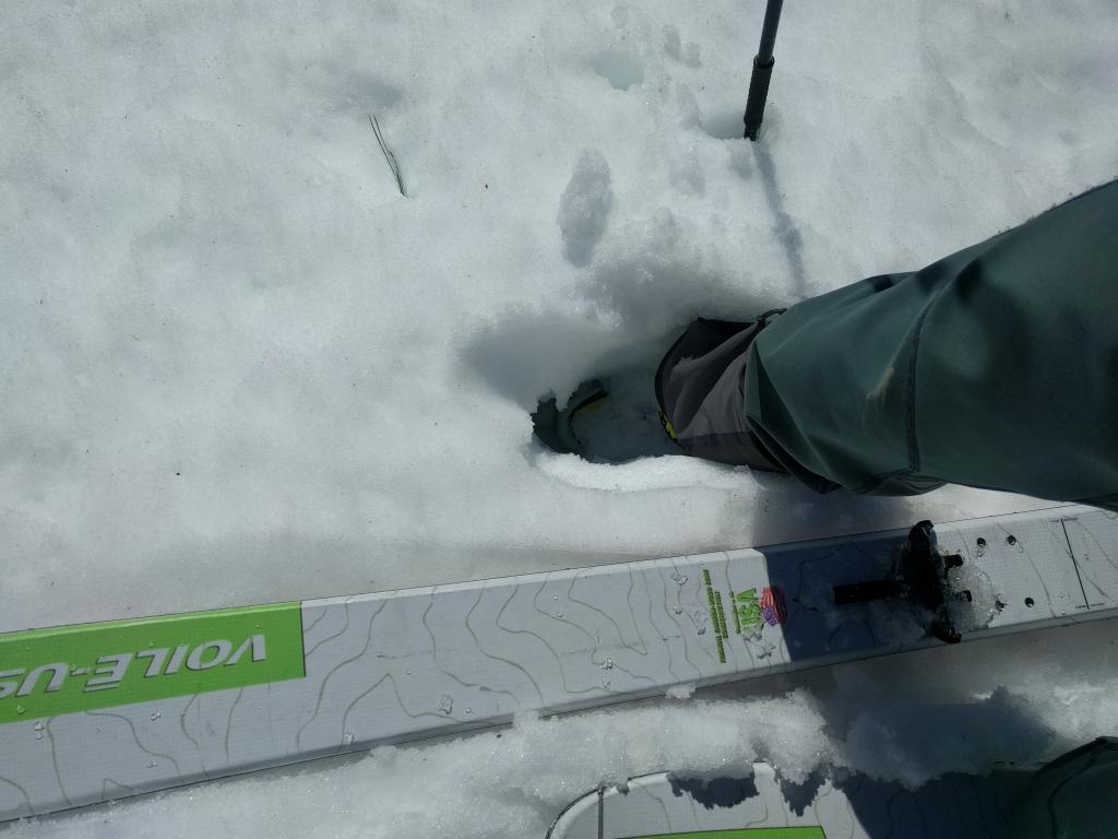 """Mid shin deep wet snow on a S <a href=""""http://www.sierraavalanchecenter.org/avalanche-terms/aspect"""" title=""""The compass direction a slope faces (i.e. North, South, East, or West.)"""" class=""""lexicon-term"""">aspect</a> at 6600 ft. at 10:30 am."""