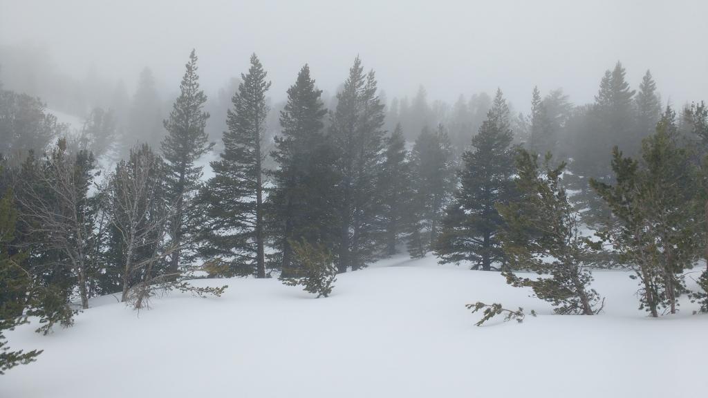 Foggy/misty conditions on Tamarack Peak.