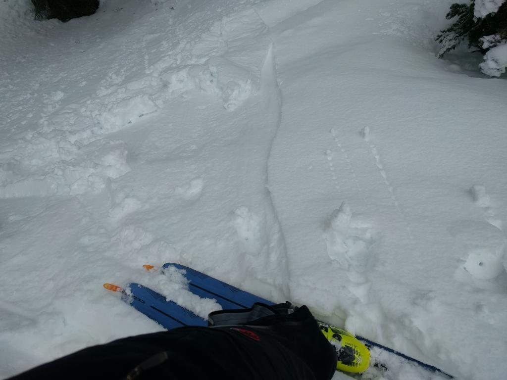 Loose wet instabilities on a N facing slope at around 7400 ft.