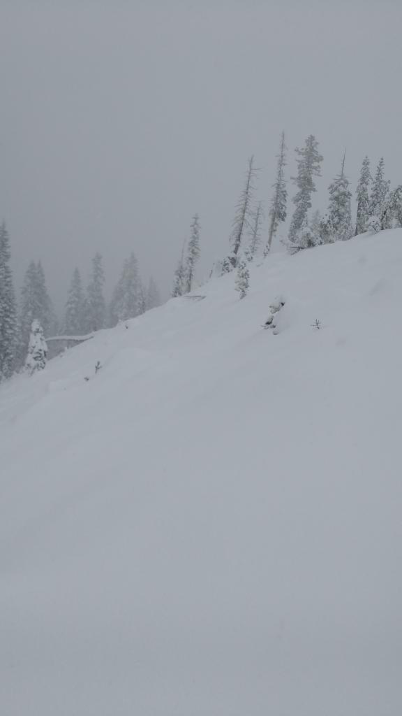 Andesite Ridge ~8,000', 14 inches of new snow.
