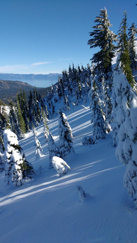 """N <a href=""""https://www.sierraavalanchecenter.org/avalanche-terms/aspect"""" title=""""The compass direction a slope faces (i.e. North, South, East, or West.)"""" class=""""lexicon-term"""">aspect</a> snowcover of 11 inches at ~8,000'."""