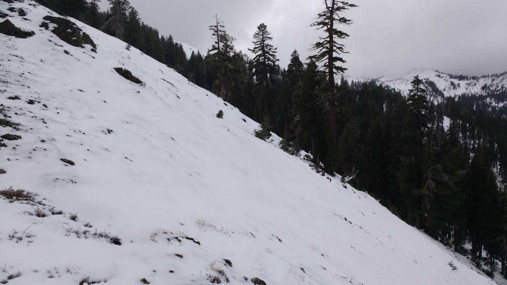 "Fairly thin snowcover on N <a href=""https://www.sierraavalanchecenter.org/avalanche-terms/aspect"" title=""The compass direction a slope faces (i.e. North, South, East, or West.)"" class=""lexicon-term"">aspect</a> at 7,800'. <a href=""https://www.sierraavalanchecenter.org/avalanche-terms/anchors"" title=""Trees, bushes or rocks protruding though the slab that may help hold it in place."" class=""lexicon-term"">Anchors</a> negated."