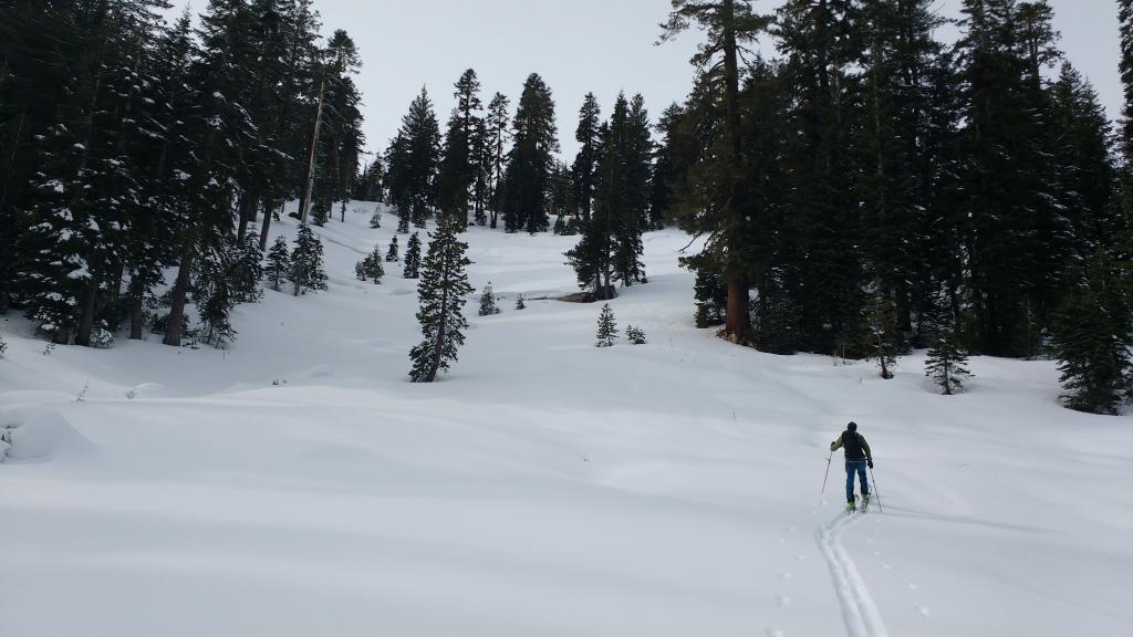 "Large SH existed in lower meadow but not on open slope above.  8000', NE-E <a href=""https://www.sierraavalanchecenter.org/avalanche-terms/aspect"" title=""The compass direction a slope faces (i.e. North, South, East, or West.)"" class=""lexicon-term"">aspects</a>."