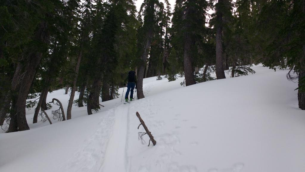 "Snow coverage on N <a href=""https://www.sierraavalanchecenter.org/avalanche-terms/aspect"" title=""The compass direction a slope faces (i.e. North, South, East, or West.)"" class=""lexicon-term"">aspect</a> at 8600'."