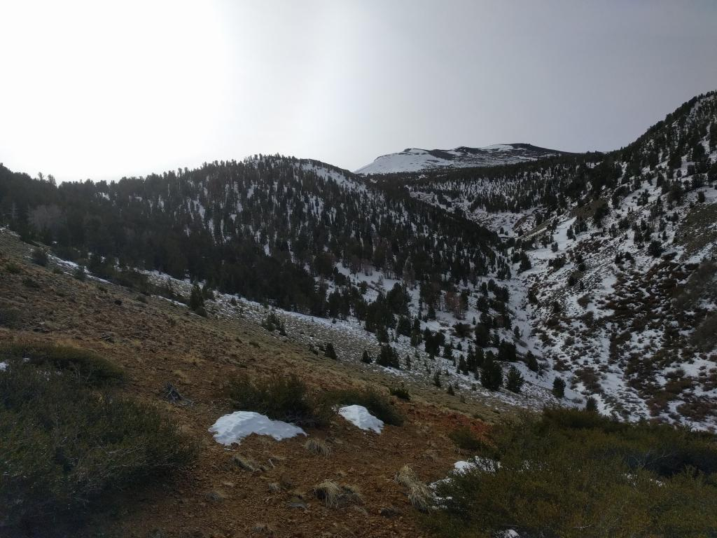 "Looking up at the coverage on N-NE <a href=""https://www.sierraavalanchecenter.org/avalanche-terms/aspect"" title=""The compass direction a slope faces (i.e. North, South, East, or West.)"" class=""lexicon-term"">aspects</a> between 8800 and 10000 ft. while standing at 8600 ft."