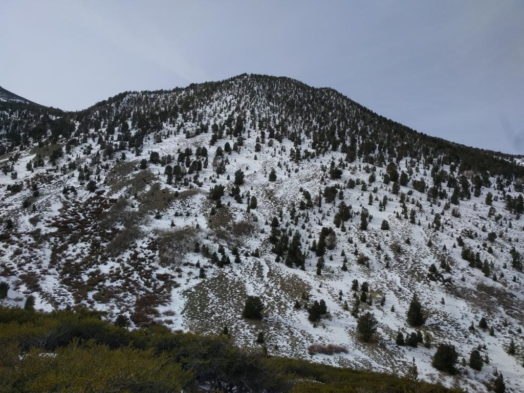 "Coverage on E <a href=""https://www.sierraavalanchecenter.org/avalanche-terms/aspect"" title=""The compass direction a slope faces (i.e. North, South, East, or West.)"" class=""lexicon-term"">aspects</a> between 8600 and 9600 ft."