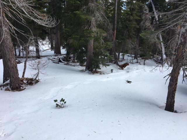 """Snowcover looking upslope on N <a href=""""https://www.sierraavalanchecenter.org/avalanche-terms/aspect"""" title=""""The compass direction a slope faces (i.e. North, South, East, or West.)"""" class=""""lexicon-term"""">aspect</a> at 8,000'."""