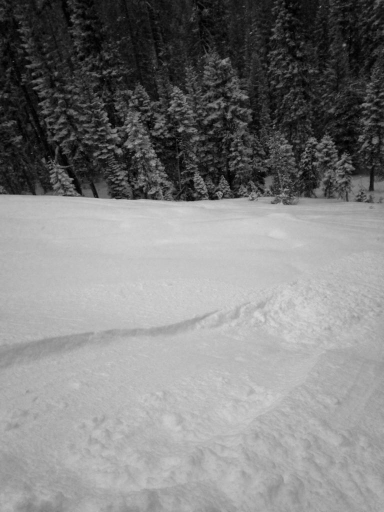 """Small <a href=""""https://www.sierraavalanchecenter.org/avalanche-terms/loose-snow-avalanche"""" title=""""An avalanche that releases from a point and spreads downhill collecting more snow - different from a slab avalanche. Also called a point-release or sluff."""" class=""""lexicon-term"""">loose dry avalanche</a>"""