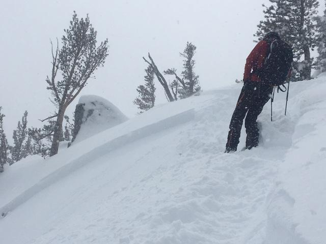 "<a href=""https://www.sierraavalanchecenter.org/avalanche-terms/wind-slab"" title=""A cohesive layer of snow formed when wind deposits snow onto leeward terrain. Wind slabs are often smooth and rounded and sometimes sound hollow."" class=""lexicon-term"">Wind slab</a> <a href=""https://www.sierraavalanchecenter.org/avalanche-terms/crown-face"" title=""The top fracture surface of a slab avalanche. Usually smooth, clean cut, and angled 90 degrees to the bed surface."" class=""lexicon-term"">crown</a>."