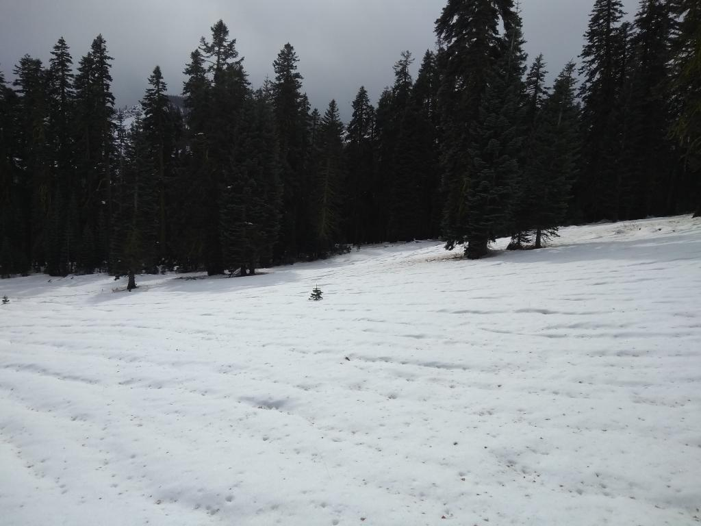 Another view of snow cover on ridgetop at ~7,900'.