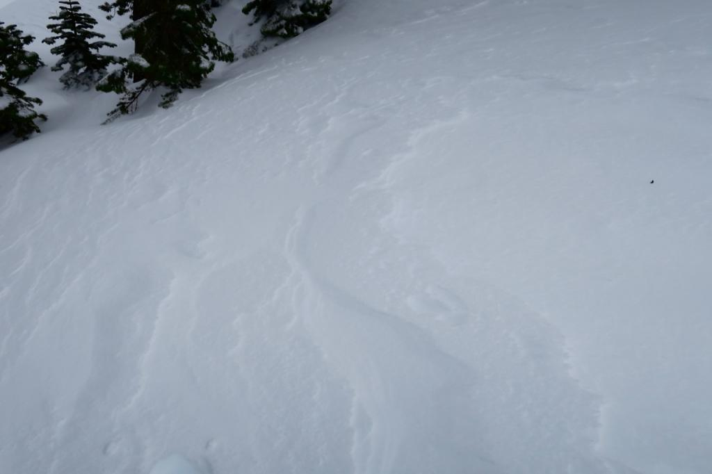 Evidence of previous wind effect on the snow surface even in near treeline terrain.