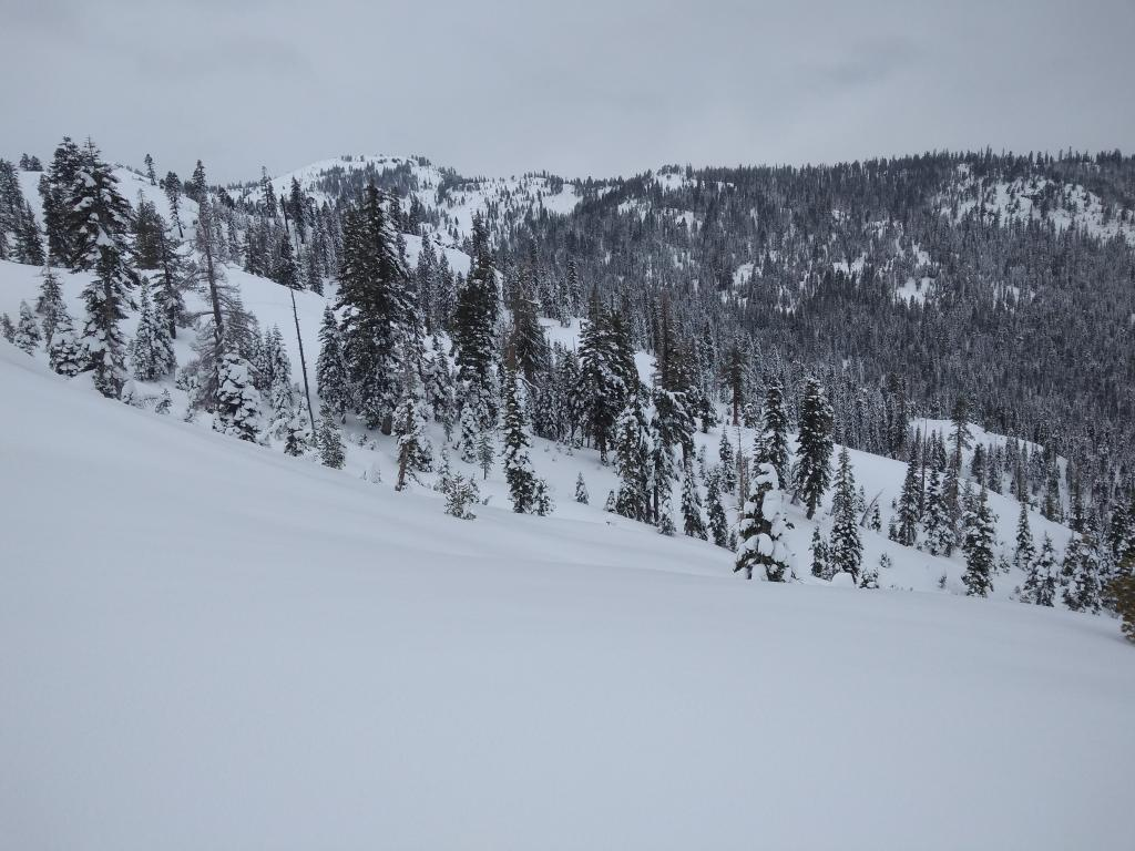 "This type of open below treeline terrain has even distribution of large <a href=""https://www.sierraavalanchecenter.org/avalanche-terms/surface-hoar"" title=""Featherly crystals that form on the snow surface during clear and calm conditions - essentially frozen dew. Forms a persistent weak layer once buried."" class=""lexicon-term"">surface hoar</a> across slope."
