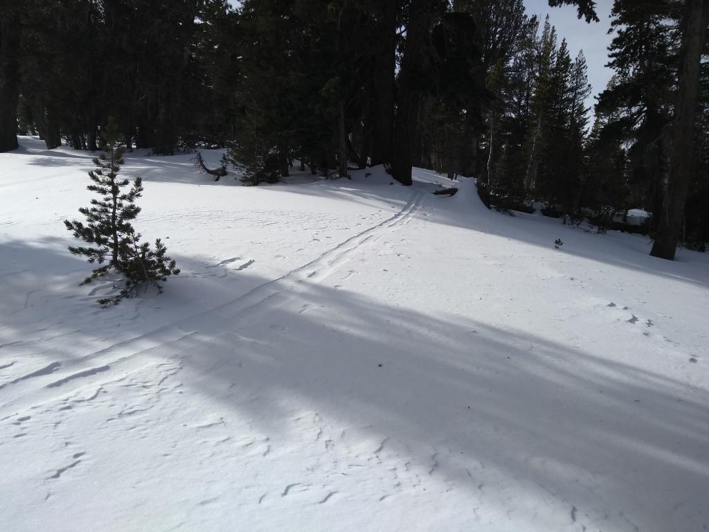 """1 cm of wind drifted snow in our <a href=""""https://www.sierraavalanchecenter.org/avalanche-terms/skin-track"""" title=""""Backcountry skiers and some snowboarders ascend slopes using climbing skins attached to the bottom of their skis."""" class=""""lexicon-term"""">skin track</a> set 2 hours prior."""