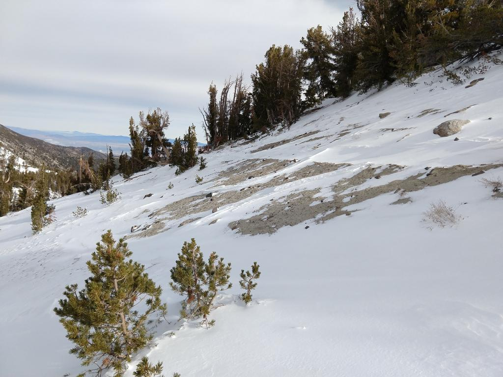 """Wind scouring on a <a href=""""https://www.sierraavalanchecenter.org/avalanche-terms/windward"""" title=""""The upwind side of an obstacle such as a ridge. Usually snow is eroded from windward slopes making them relatively safer."""" class=""""lexicon-term"""">windward</a> slope in near treeline terrain"""