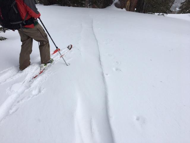 "<a href=""/avalanche-terms/skin-track"" title=""Backcountry skiers and some snowboarders ascend slopes using climbing skins attached to the bottom of their skis."" class=""lexicon-term"">Skin track</a> refilled within 2.5 hours from wind transport in open below treeline terrain."