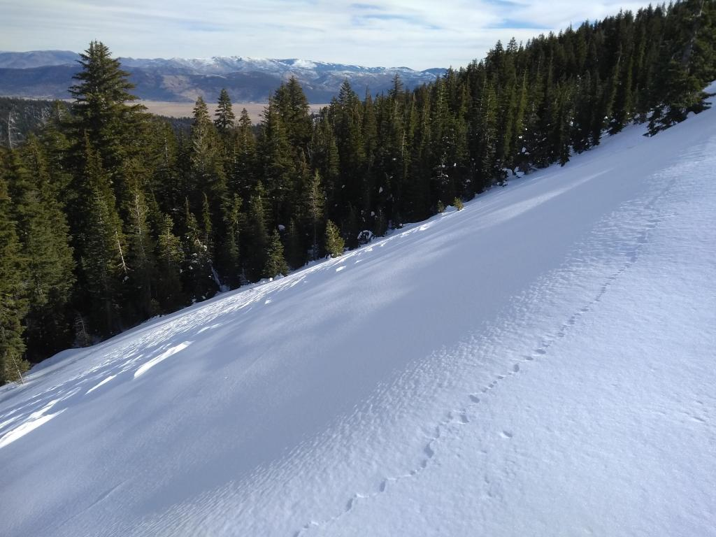 "NE <a href=""https://www.sierraavalanchecenter.org/avalanche-terms/aspect"" title=""The compass direction a slope faces (i.e. North, South, East, or West.)"" class=""lexicon-term"">aspect</a> wind scoured terrain at/just above treeline. Exposed <a href=""https://www.sierraavalanchecenter.org/avalanche-terms/rain-crust"" title=""A clear layer of ice formed when rain falls on the snow surface then freezes."" class=""lexicon-term"">rain crust</a> on upper <a href=""https://www.sierraavalanchecenter.org/avalanche-terms/starting-zone"" title=""The portion of an avalanche path where an avalanche releases."" class=""lexicon-term"">start zone</a>, wind scoured mid slope, unconsolidated snow at treeline."