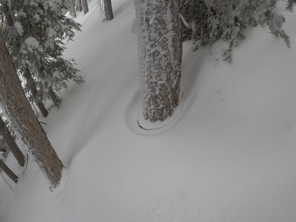 "Tree rings demonstrating snow <a href=""https://www.sierraavalanchecenter.org/avalanche-terms/settlement"" title=""The slow, deformation and densification of snow under the influence of gravity. Not to be confused with collasping"" class=""lexicon-term"">settlement</a> due to warming."