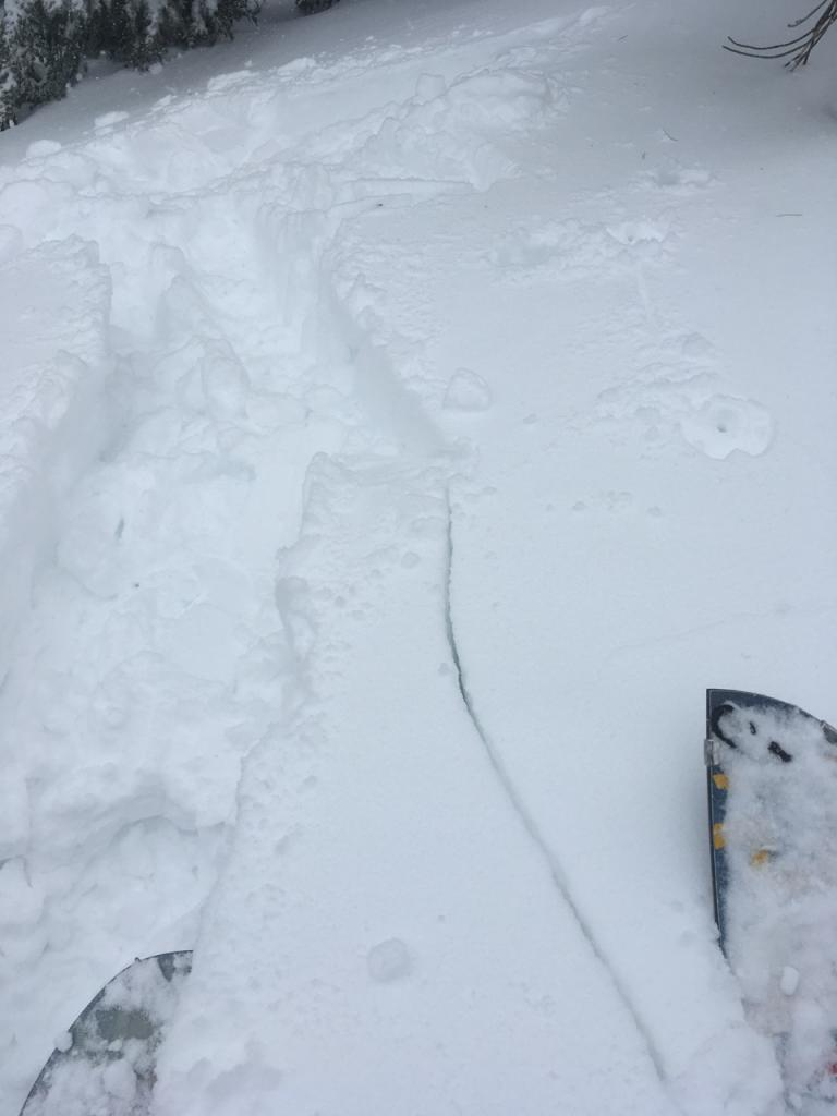 "New storm <a href=""https://www.sierraavalanchecenter.org/avalanche-terms/slab"" title=""A relatively cohesive snowpack layer."" class=""lexicon-term"">slab</a> cracking on slope undercut by <a href=""https://www.sierraavalanchecenter.org/avalanche-terms/skin-track"" title=""Backcountry skiers and some snowboarders ascend slopes using climbing skins attached to the bottom of their skis."" class=""lexicon-term"">skin track</a>."