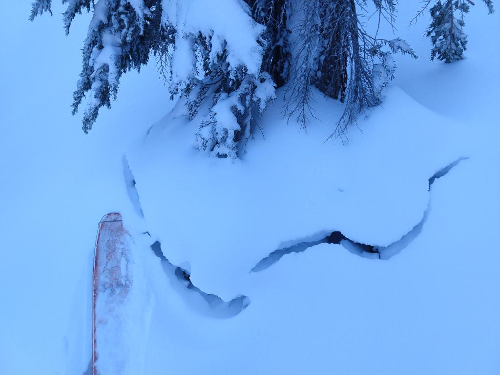 "<a href=""https://www.sierraavalanchecenter.org/avalanche-terms/settlement"" title=""The slow, deformation and densification of snow under the influence of gravity. Not to be confused with collasping"" class=""lexicon-term"">Settlement</a> crack around the base of a tree."