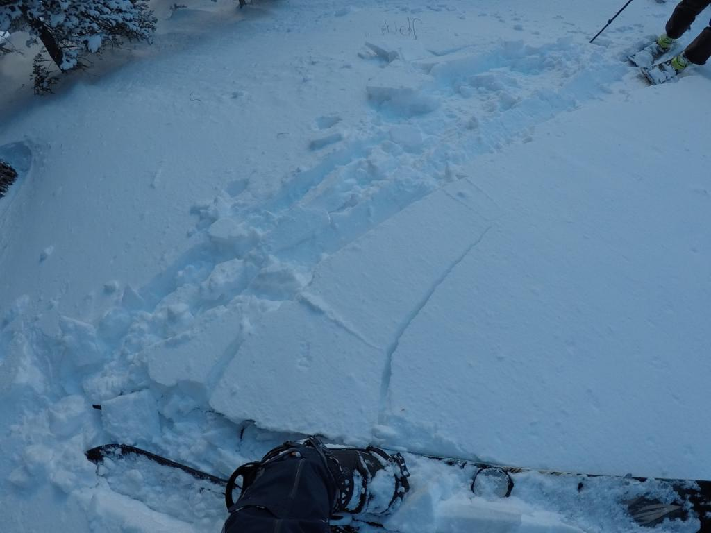 """The new snow was mostly uncohesive, but did show a little <a href=""""https://www.sierraavalanchecenter.org/avalanche-terms/slab"""" title=""""A relatively cohesive snowpack layer."""" class=""""lexicon-term"""">slab</a> characteristics."""
