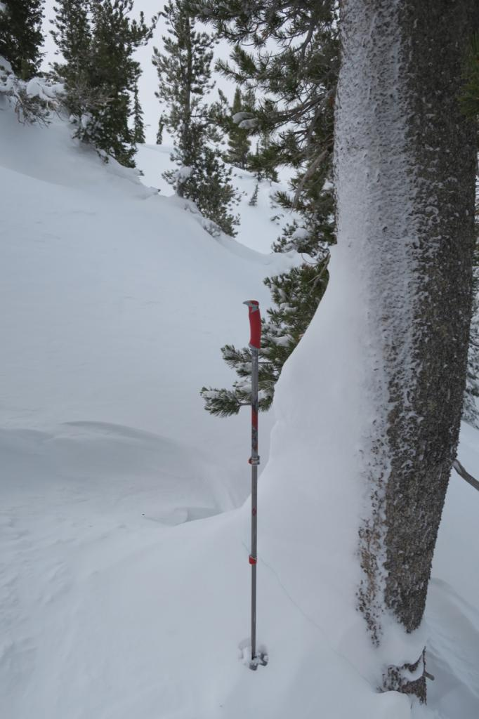 "Snow pushed up against tree by <a href=""https://www.sierraavalanchecenter.org/avalanche-terms/avalanche"" title=""A mass of snow sliding, tumbling, or flowing down an inclined surface."" class=""lexicon-term"">slide</a>."