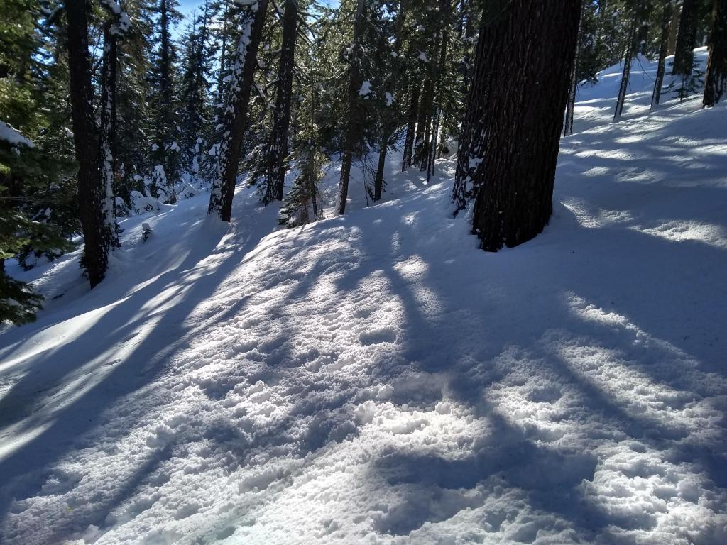 "Cold snow with tree drippings on N <a href=""https://www.sierraavalanchecenter.org/avalanche-terms/aspect"" title=""The compass direction a slope faces (i.e. North, South, East, or West.)"" class=""lexicon-term"">aspects</a> below treeline. Most prominent below 8,000'."