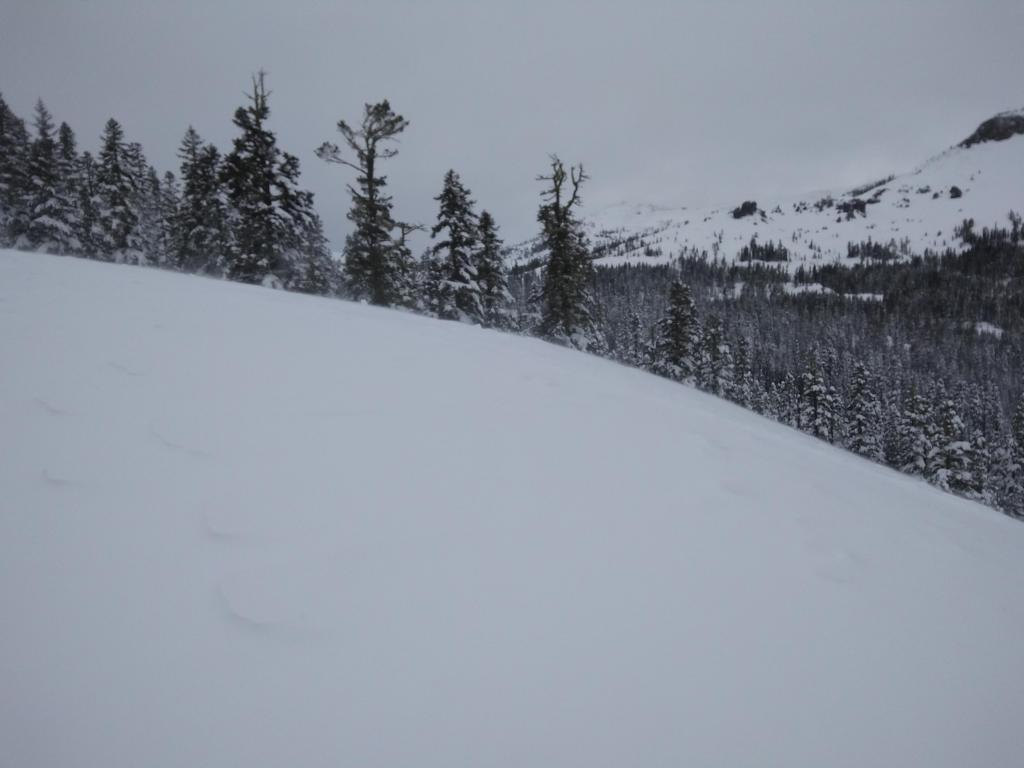 Moderate amounts of blowing snow noted as we approached near treeline terrain.