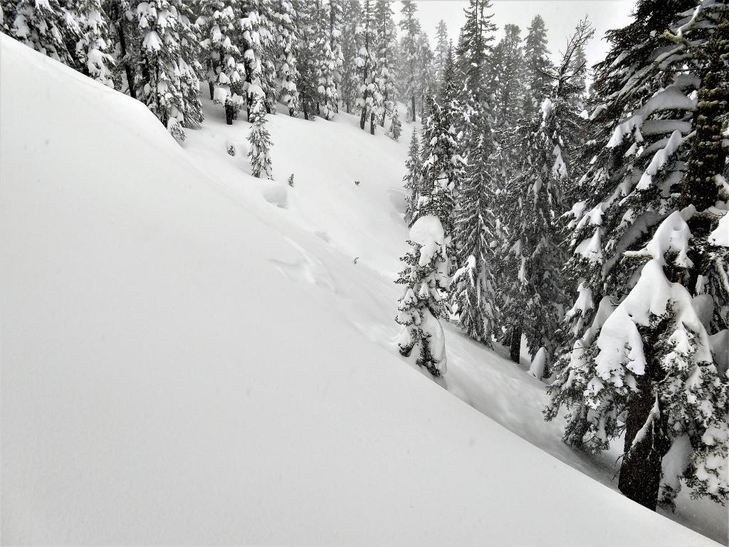 "Natural <a href=""https://www.sierraavalanchecenter.org/avalanche-terms/avalanche"" title=""A mass of snow sliding, tumbling, or flowing down an inclined surface."" class=""lexicon-term"">avalanche</a> that failed early this morning on a storm snow weakness at the beginning of the storm snow"