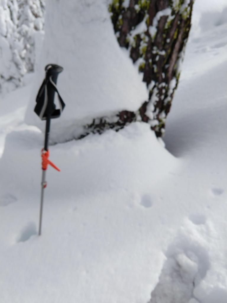 "<a href=""/avalanche-terms/settlement"" title=""The slow, deformation and densification of snow under the influence of gravity. Not to be confused with collasping"" class=""lexicon-term"">Settlement</a> cone on a tree in below treeline terrain."