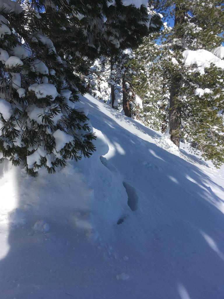 """Signs of <a href=""""https://www.sierraavalanchecenter.org/avalanche-terms/settlement"""" title=""""The slow, deformation and densification of snow under the influence of gravity. Not to be confused with collasping"""" class=""""lexicon-term"""">settlement</a> around trees"""