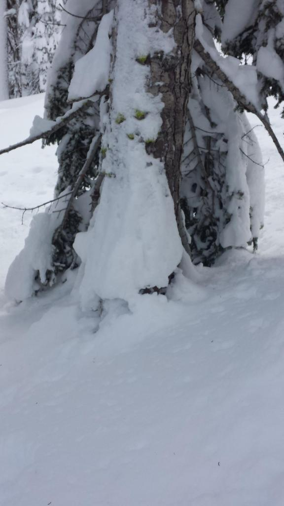 "Cracked <a href=""https://www.sierraavalanchecenter.org/avalanche-terms/settlement"" title=""The slow, deformation and densification of snow under the influence of gravity. Not to be confused with collasping"" class=""lexicon-term"">settlement</a> cone"