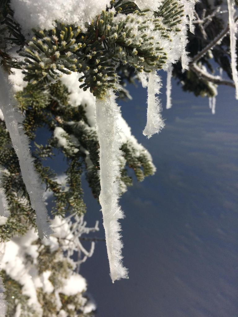 "New <a href=""https://www.sierraavalanchecenter.org/avalanche-terms/rime"" title=""Supercooled water droplets that freeze to objects in exposed terrain, forming icy deposits on the windward side. Rime can also form on snowflakes as they fall through the sky, giving them a fuzzy appearence."" class=""lexicon-term"">rime</a> ice on icicles. Did not affect our travel plans, but was fun to see."