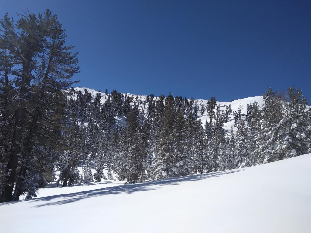 "Wind scoured terrain on upper Northerly <a href=""https://www.sierraavalanchecenter.org/avalanche-terms/aspect"" title=""The compass direction a slope faces (i.e. North, South, East, or West.)"" class=""lexicon-term"">aspects</a> in this area from the recent NE winds."
