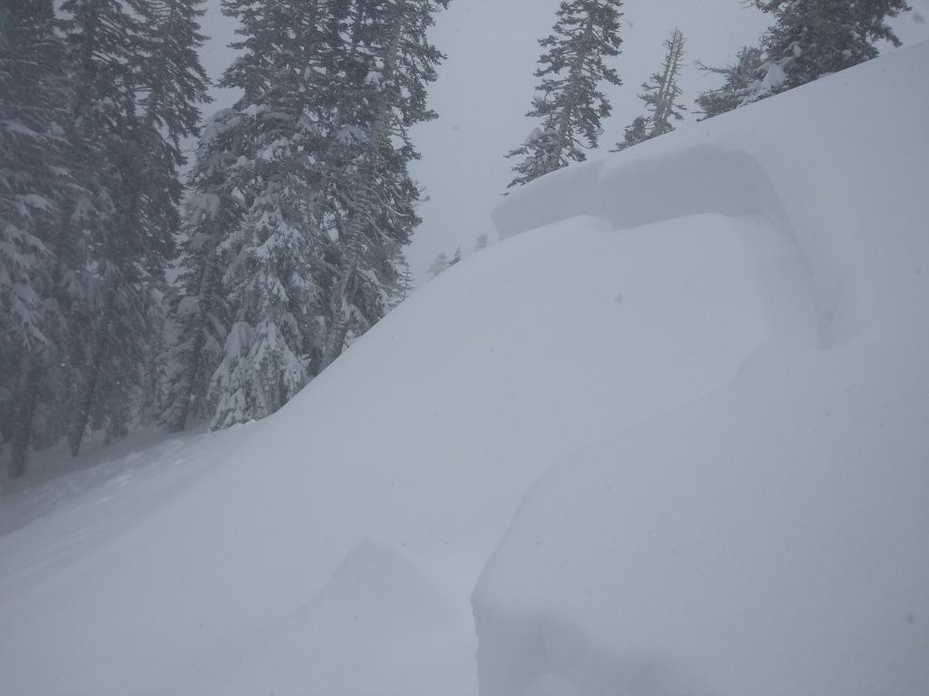 """<a href=""""/avalanche-terms/crown-face"""" title=""""The top fracture surface of a slab avalanche. Usually smooth, clean cut, and angled 90 degrees to the bed surface."""" class=""""lexicon-term"""">Crown</a> of 2-3 feet with 8 inches of storm snow on <a href=""""/avalanche-terms/bed-surface"""" title=""""The surface over which a fracture and subsequent avalanche release occurs. Can be either the ground or a snow surface."""" class=""""lexicon-term"""">bed surface</a>."""