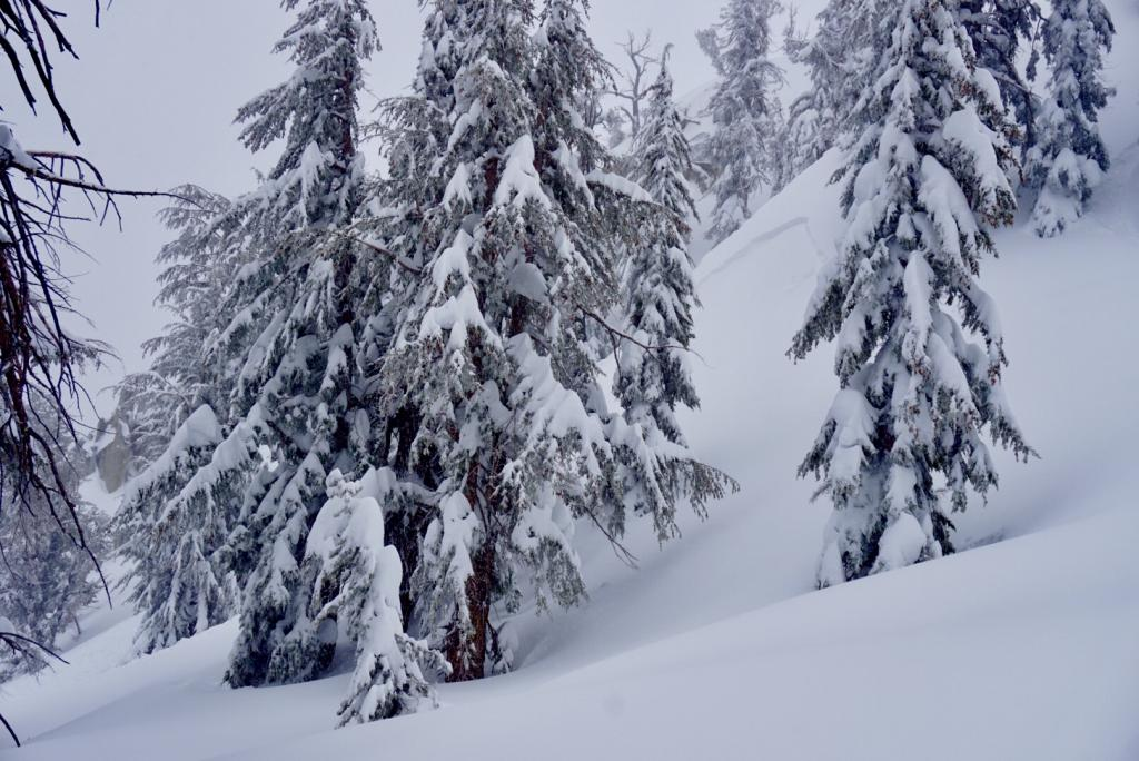 "Larger storm <a href=""https://www.sierraavalanchecenter.org/avalanche-terms/slab"" title=""A relatively cohesive snowpack layer."" class=""lexicon-term"">slab</a> (appeared to be natural) <a href=""https://www.sierraavalanchecenter.org/avalanche-terms/avalanche"" title=""A mass of snow sliding, tumbling, or flowing down an inclined surface."" class=""lexicon-term"">slide</a> <a href=""https://www.sierraavalanchecenter.org/avalanche-terms/propagation"" title=""The spreading of a fracture or crack within the snowpack."" class=""lexicon-term"">propagated</a> around terrain feature and into adjacent bowl."