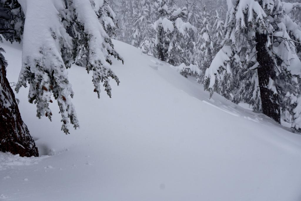 """Small natural storm <a href=""""/avalanche-terms/slab"""" title=""""A relatively cohesive snowpack layer."""" class=""""lexicon-term"""">slab</a> on <a href=""""/avalanche-terms/convex-slopes"""" title=""""A terrain feature that is curved or rounded like the exterior of a sphere or circle, i.e. goes from less steep to more steep. Convex slopes tend to be less safe than concave slopes."""" class=""""lexicon-term"""">convex</a> unsupported slope ss-n-r2-<a href=""""/avalanche-terms/d1"""" title=""""Relatively harmless to people."""" class=""""lexicon-term"""">d1</a>.5"""