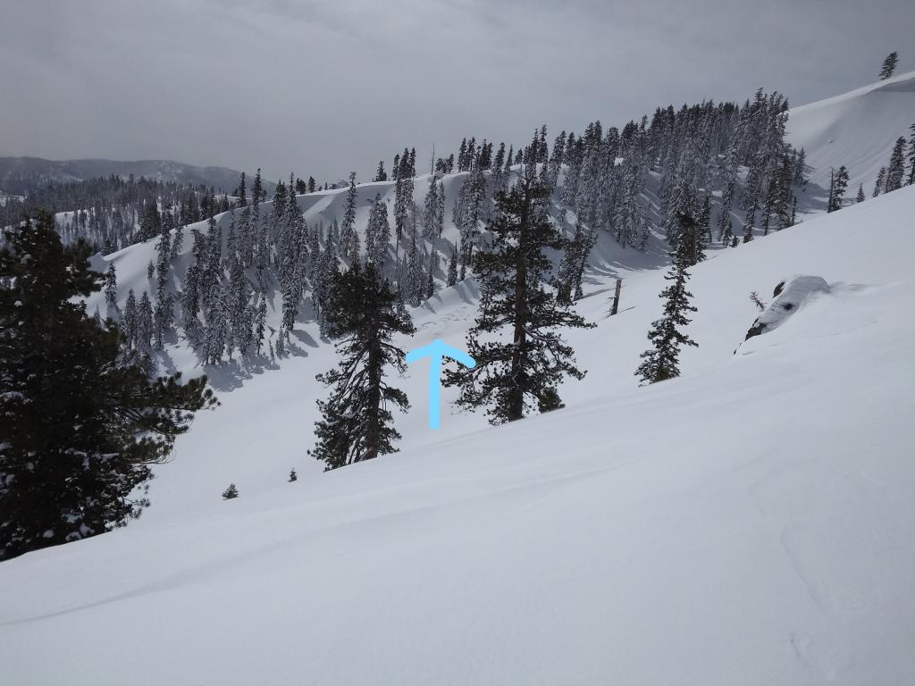"""Old <a href=""""/avalanche-terms/avalanche"""" title=""""A mass of snow sliding, tumbling, or flowing down an inclined surface."""" class=""""lexicon-term"""">avalanche</a> debris below NE-E <a href=""""/avalanche-terms/aspect"""" title=""""The compass direction a slope faces (i.e. North, South, East, or West.)"""" class=""""lexicon-term"""">aspect</a> <a href=""""/avalanche-terms/wind-loading"""" title=""""The added weight of wind drifted snow."""" class=""""lexicon-term"""">wind loaded</a> terrain, likely from natural <a href=""""/avalanche-terms/wind-slab"""" title=""""A cohesive layer of snow formed when wind deposits snow onto leeward terrain. Wind slabs are often smooth and rounded and sometimes sound hollow."""" class=""""lexicon-term"""">wind slab</a> on March 6."""