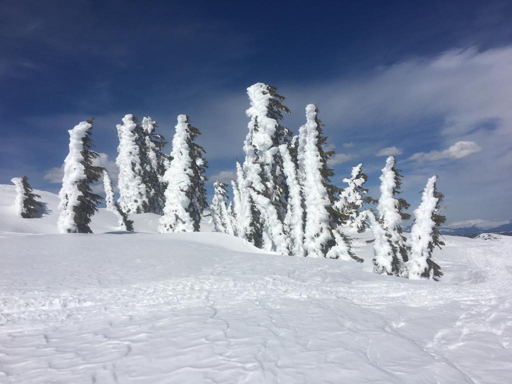 High elevation trees holding their N facing snow