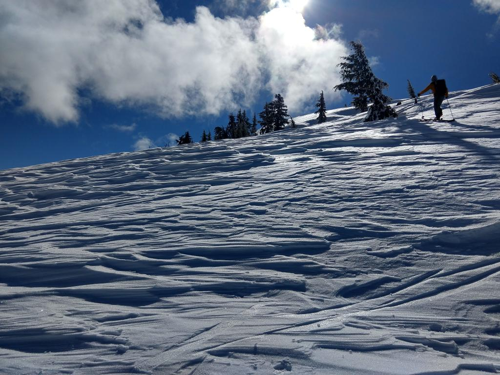 """NW <a href=""""/avalanche-terms/aspect"""" title=""""The compass direction a slope faces (i.e. North, South, East, or West.)"""" class=""""lexicon-term"""">aspect</a> near treeline terrain scoured by recent SW winds."""