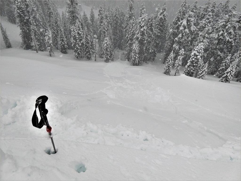 """<a href=""""https://www.sierraavalanchecenter.org/avalanche-terms/ski-cut"""" title=""""A stability test where a skier, rider or snowmobiler rapidly crosses an avalanche starting zone to see if an avalanche initiates. Slope cuts can be dangerous and should only be performed by experienced people on small avalanche paths or test slopes."""" class=""""lexicon-term"""">Ski cut</a> <a href=""""https://www.sierraavalanchecenter.org/avalanche-terms/trigger"""" title=""""A disturbance that initiates fracture within the weak layer causing an avalanche. In 90 percent of avalanche accidents, the victim or someone in the victims party triggers the avalanche."""" class=""""lexicon-term"""">triggered</a> <a href=""""https://www.sierraavalanchecenter.org/avalanche-terms/d1"""" title=""""Relatively harmless to people."""" class=""""lexicon-term"""">D1</a>.5-<a href=""""https://www.sierraavalanchecenter.org/avalanche-terms/d2"""" title=""""Could bury, injure, or kill a person."""" class=""""lexicon-term"""">D2</a> Loose wet <a href=""""https://www.sierraavalanchecenter.org/avalanche-terms/avalanche"""" title=""""A mass of snow sliding, tumbling, or flowing down an inclined surface."""" class=""""lexicon-term"""">avalanche</a>"""