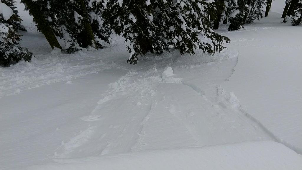 """This <a href=""""https://www.sierraavalanchecenter.org/avalanche-terms/ski-cut"""" title=""""A stability test where a skier, rider or snowmobiler rapidly crosses an avalanche starting zone to see if an avalanche initiates. Slope cuts can be dangerous and should only be performed by experienced people on small avalanche paths or test slopes."""" class=""""lexicon-term"""">ski cut</a> <a href=""""https://www.sierraavalanchecenter.org/avalanche-terms/trigger"""" title=""""A disturbance that initiates fracture within the weak layer causing an avalanche. In 90 percent of avalanche accidents, the victim or someone in the victims party triggers the avalanche."""" class=""""lexicon-term"""">triggered</a> <a href=""""https://www.sierraavalanchecenter.org/avalanche-terms/d1"""" title=""""Relatively harmless to people."""" class=""""lexicon-term"""">D1</a> loose wet <a href=""""https://www.sierraavalanchecenter.org/avalanche-terms/avalanche"""" title=""""A mass of snow sliding, tumbling, or flowing down an inclined surface."""" class=""""lexicon-term"""">avalanche</a> released on a NNW <a href=""""https://www.sierraavalanchecenter.org/avalanche-terms/aspect"""" title=""""The compass direction a slope faces (i.e. North, South, East, or West.)"""" class=""""lexicon-term"""">aspect</a> at"""
