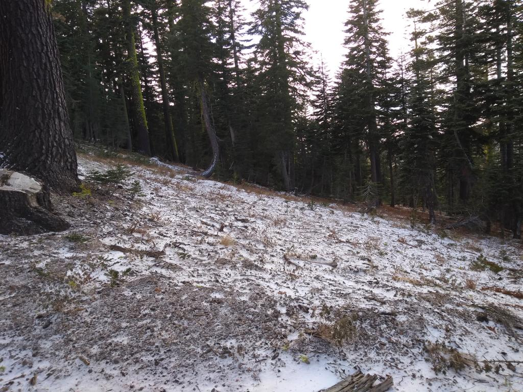 Less than one inch of snow below treeline at 8,000'.