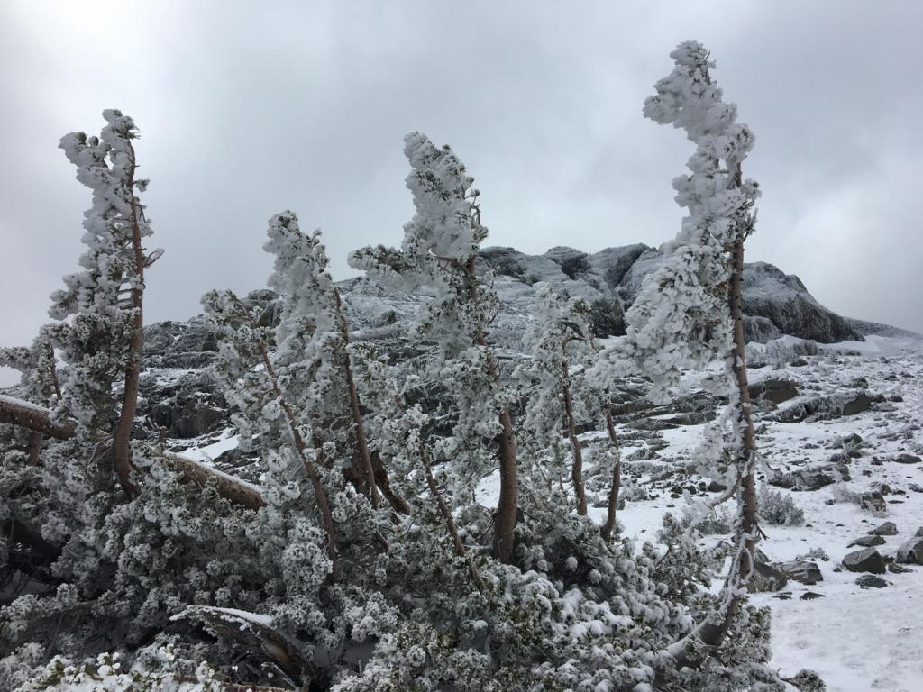 """<a href=""""/avalanche-terms/rime"""" title=""""Supercooled water droplets that freeze to objects in exposed terrain, forming icy deposits on the windward side. Rime can also form on snowflakes as they fall through the sky, giving them a fuzzy appearence."""" class=""""lexicon-term"""">Rimed</a> trees showing evidence of recent NE winds."""