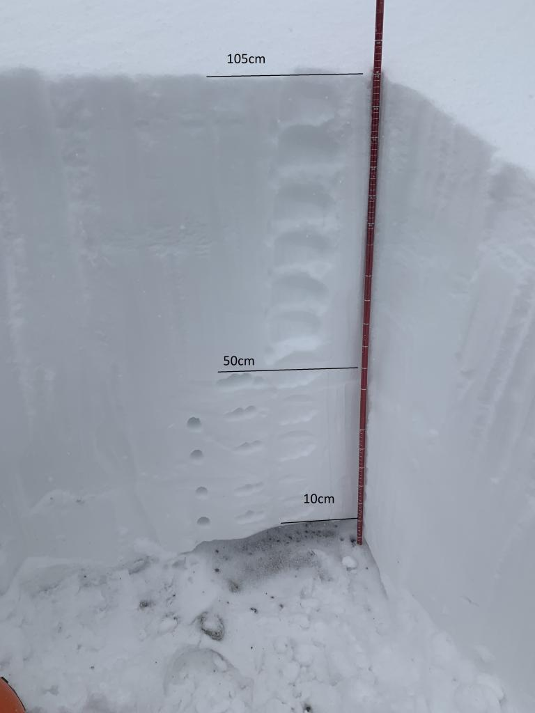 55cm of light fist hard snow