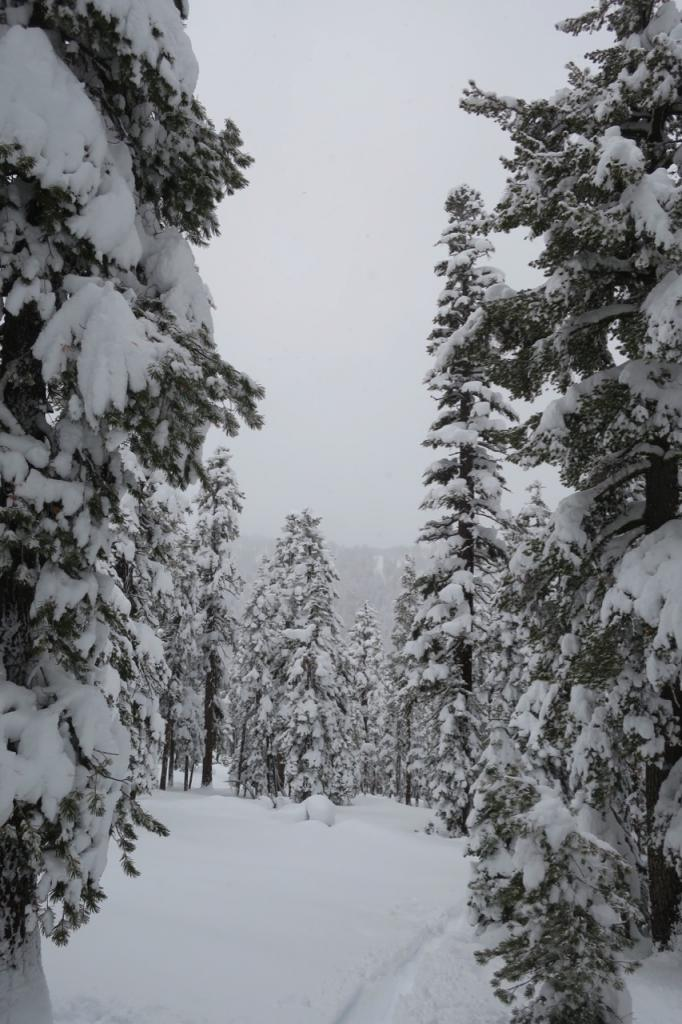 Snow covered trees at about 8000 feet on Luther Pass.