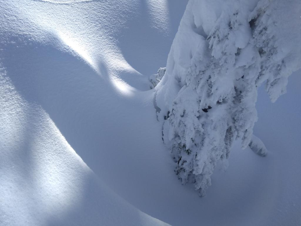 "<a href=""/avalanche-terms/settlement"" title=""The slow, deformation and densification of snow under the influence of gravity. Not to be confused with collasping"" class=""lexicon-term"">Settlement</a> around trees at ~8,600&#039;."