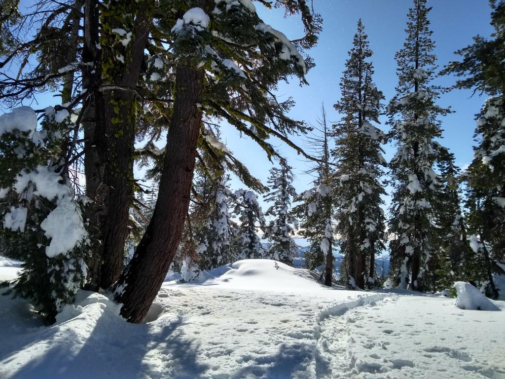"Wet snow with tree dripping and bombing at ~7,900&#039; on W <a href=""/avalanche-terms/aspect"" title=""The compass direction a slope faces (i.e. North, South, East, or West.)"" class=""lexicon-term"">aspect</a>."