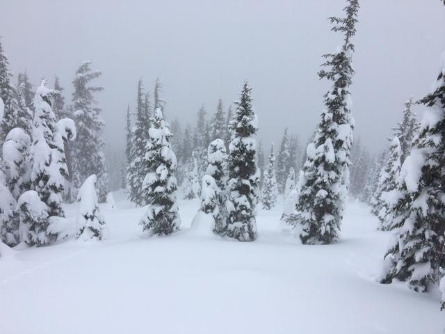 Light snowfall above 8000' with low clouds. HS>1m.