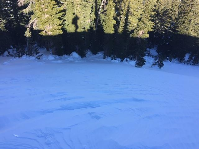 """Hard <a href=""""/avalanche-terms/wind-slab"""" title=""""A cohesive layer of snow formed when wind deposits snow onto leeward terrain. Wind slabs are often smooth and rounded and sometimes sound hollow."""" class=""""lexicon-term"""">wind slab</a> debris down into trees"""